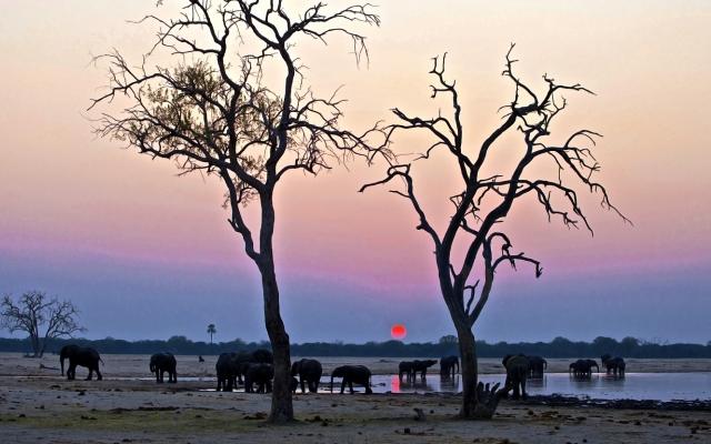 Éléphants au coucher du soleil au parc de Hwange
