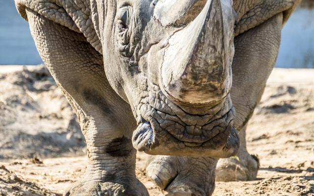 Les animaux en danger, comment les safaris peuvent les aider