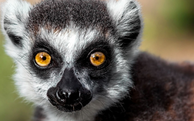 Séjour dans les îles de Madagascar
