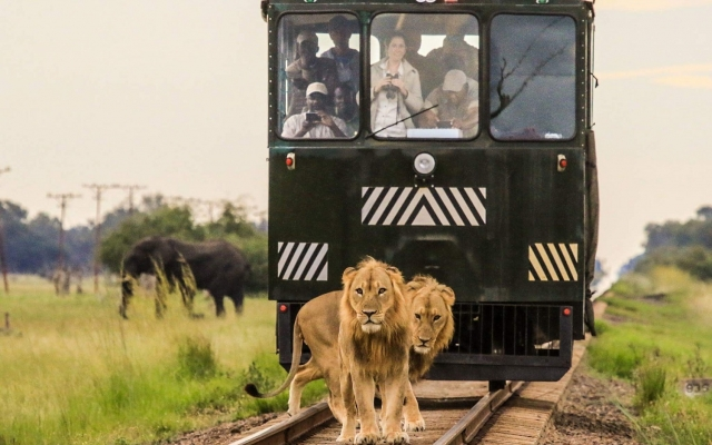 Safari en train Elephant Express Zimbabwe Hwange