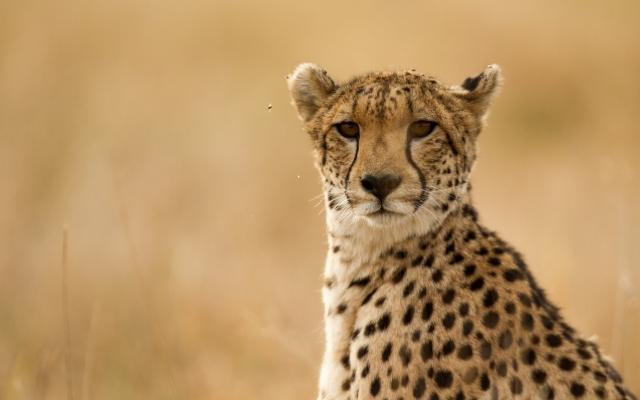 Safari à Nanzhila Plains au parc de Kafue