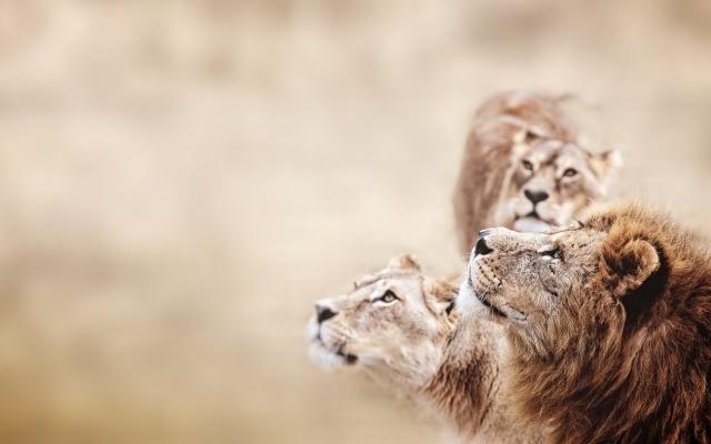 Safari Tanzanie Zanzibar en famille