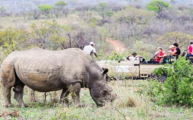 Safari en 4x4 en voyage en Afrique du Sud