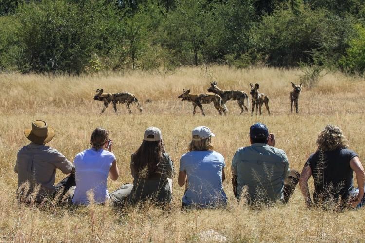 Safari à pied dans le parc de Hwange en compagnie de vos guides