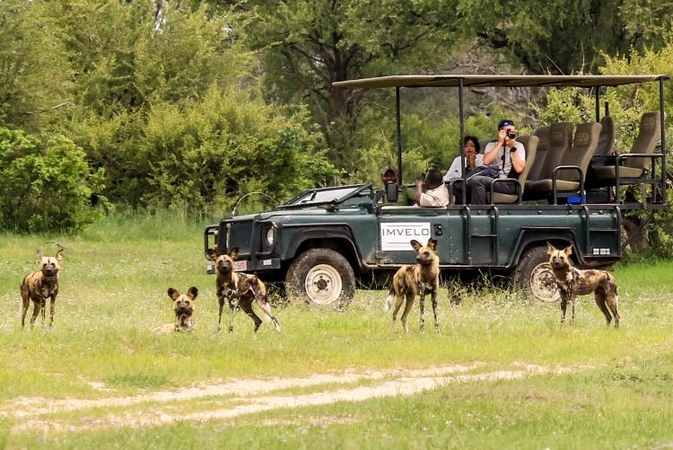 Safari en 4x4 et rencontre avec les chiens sauvages au parc de Hwange, Zimbabwe