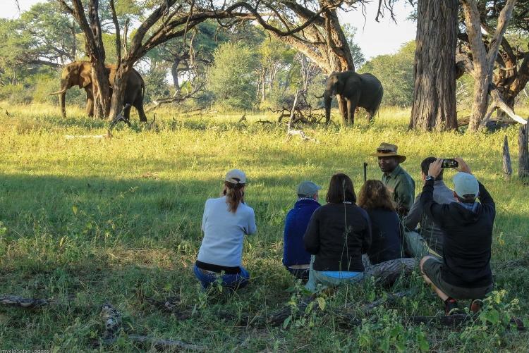 Des safaris à pied, en 4x4, en canoés, en bateaux... une kyrielle d'activités vous attendent au Zimbabwe !