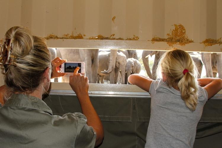 Observation des éléphants depuis une cachette au parc de Hwange