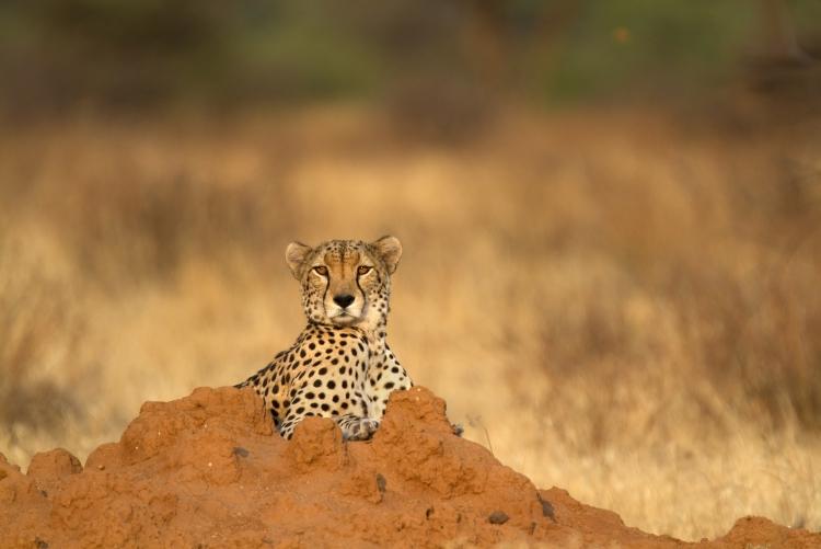 Agence de voyage Afrique