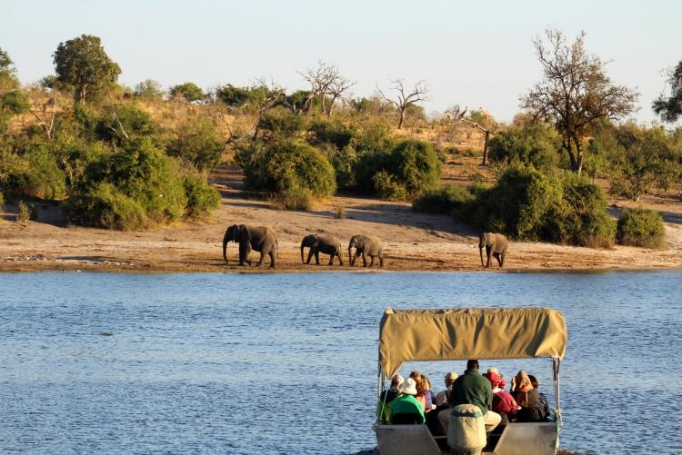 Croisière Chobe Botswana
