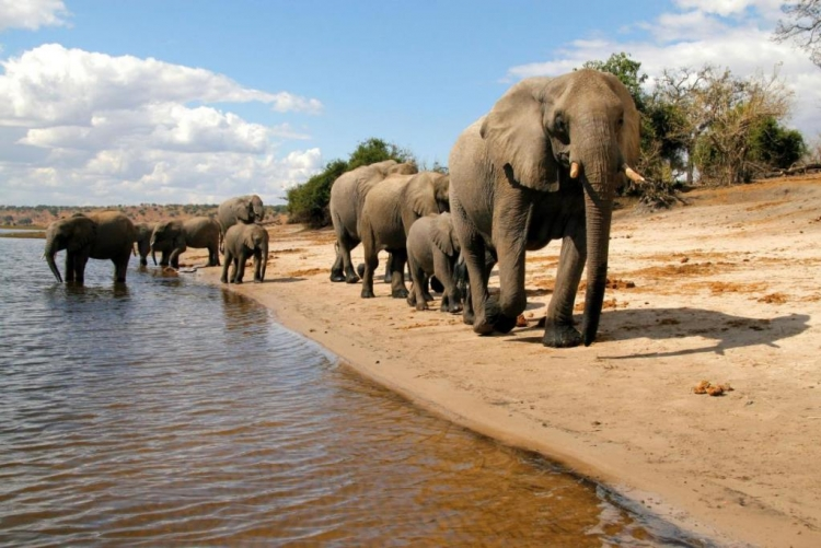 Agence voyage Botswana Chobe