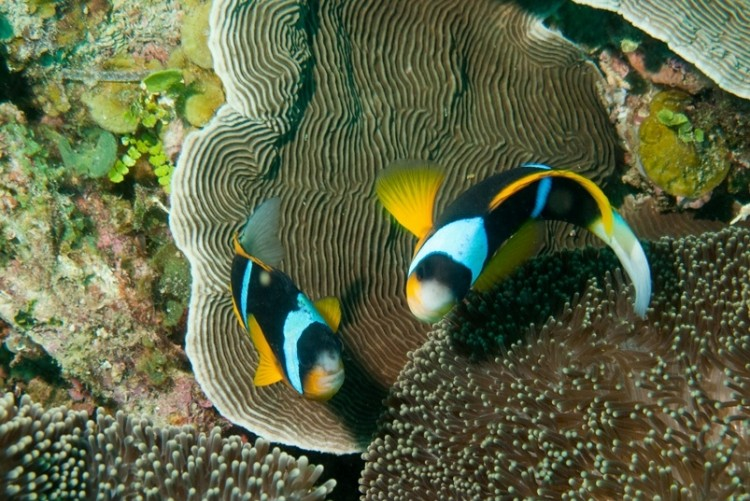 Plongées sous marines Mozambique
