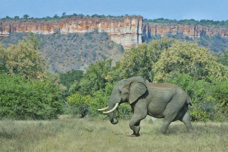 """Safari Zimbabwe : Gonarezhou signifie """"lieu des éléphants"""""""