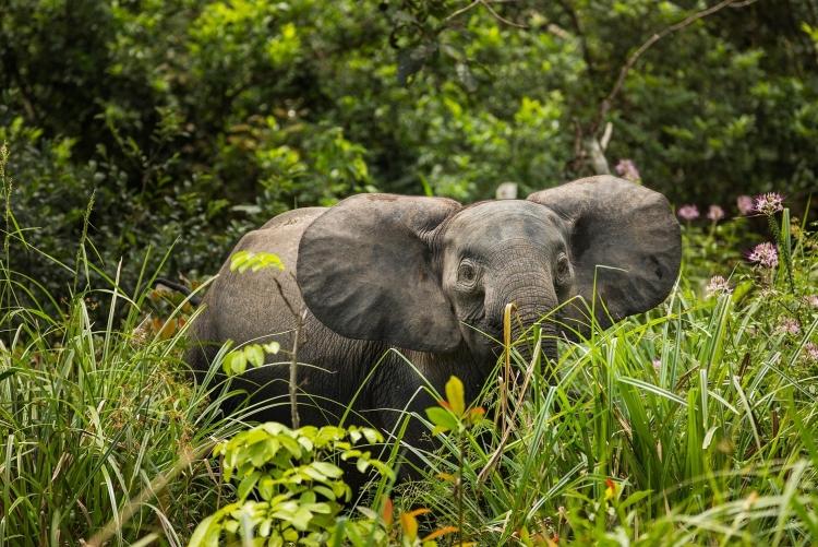 Safari en Afrique ecotourisme
