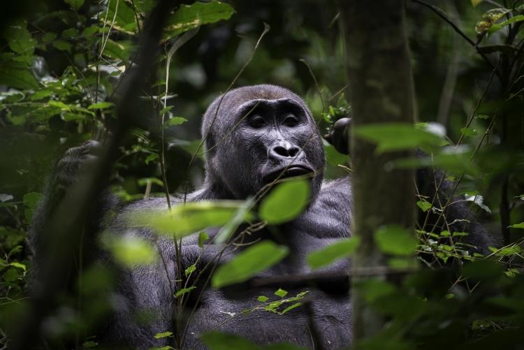 Agence de voyage safaris