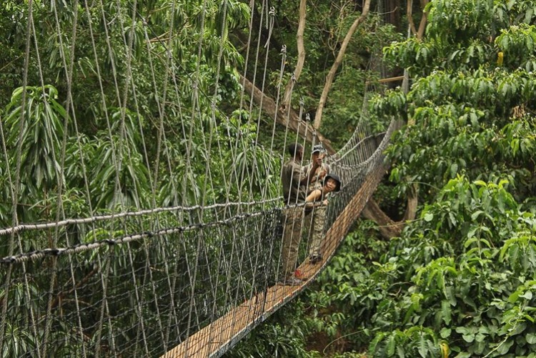 Marche sur la canopée à Manyara - Safari Tanzanie