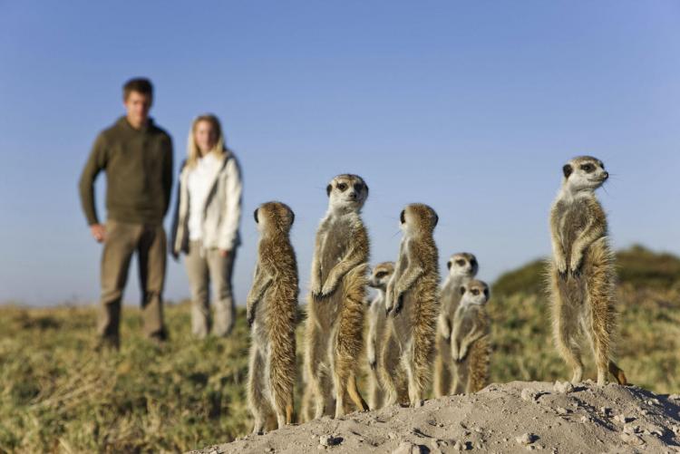 Suricates à Jacks Camp (Photo ©David Crookes) en voyage au Botswana
