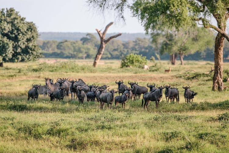 Voyage Zimbabwe safari au parc de Gonarezhou