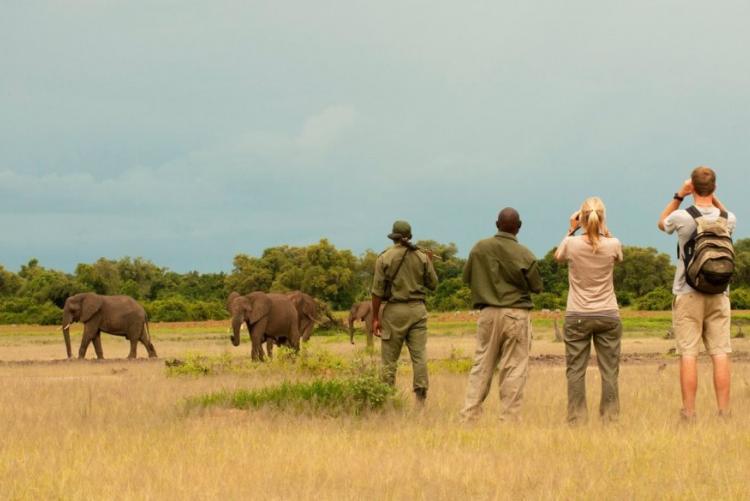 Safari à pied Afrique