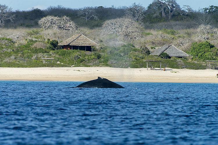 îles du Mozambique