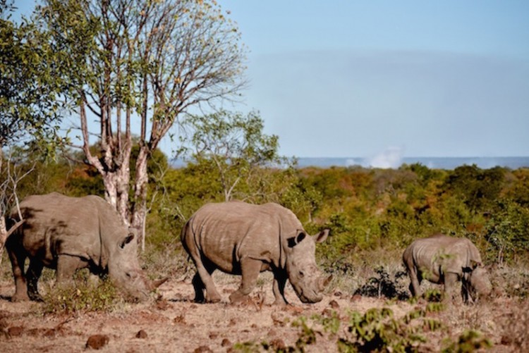 Safari Chutes Victoria