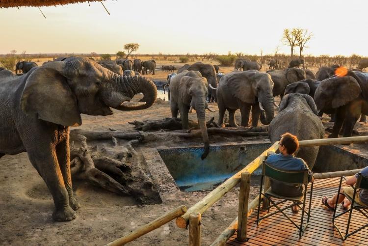 Voyage de noces Zimbabwe