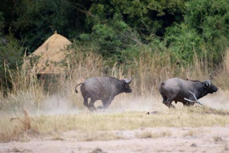 vacances safaris circuit afrique