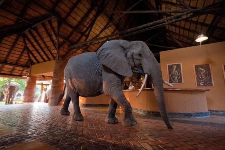 Zambie safari sur mesure