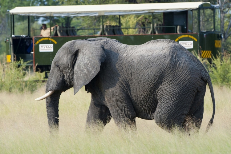 Safari en tramway au parc national de Hwange