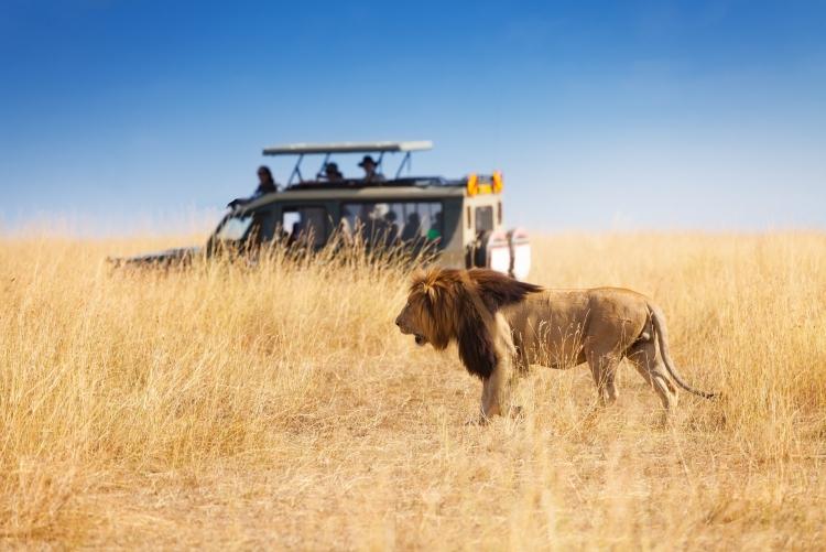 Safari familial en Tanzanie en 4x4 privé