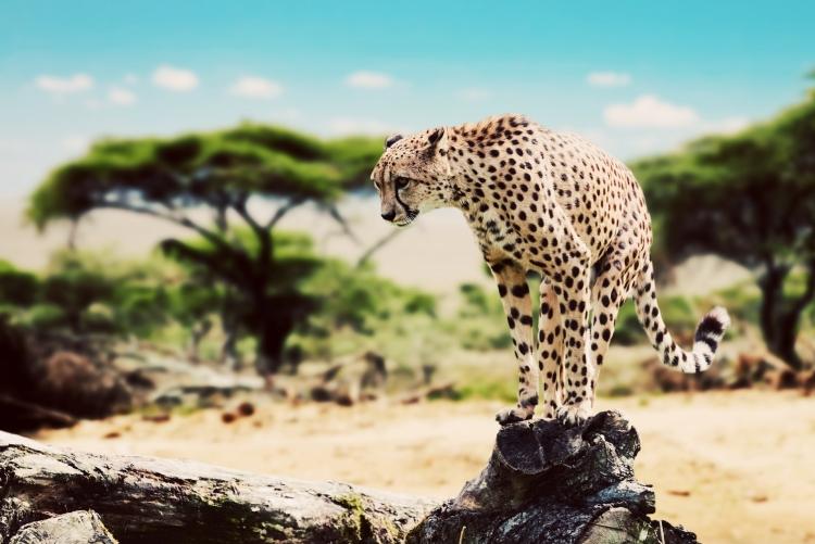 Voyage Tanzanie safari sur mesure