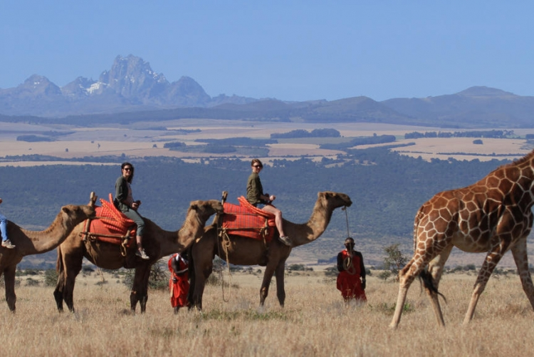 Safaris à pied, en 4x4, à dos de dromadaires ou à cheval, il y en a pour tous les goûts à Lewa !