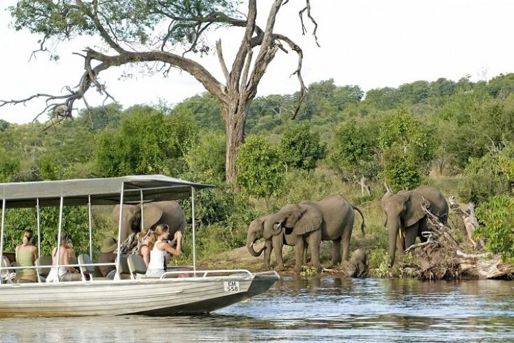 Rencontre avec les éléphants à Chobe, Safari Botswana