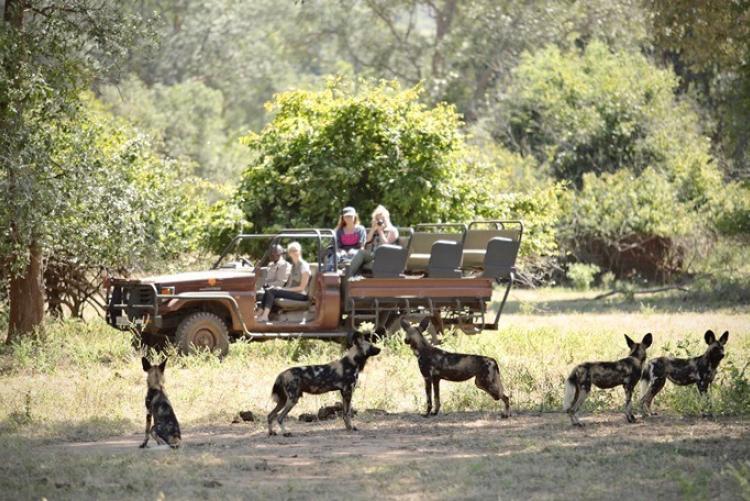 Safari en 4x4 au Lower Zambezi, à Chongwe, en voyage en Zambie