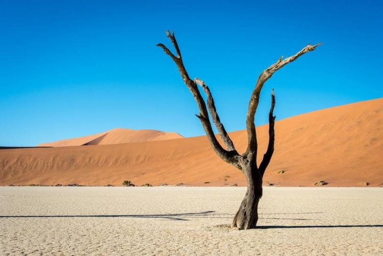 Dead Vlei, Sossusvlei, voyage sur mesure en Namibie