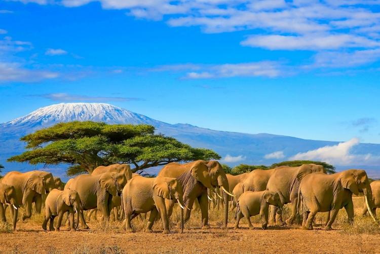 Kilimandjaro voyage