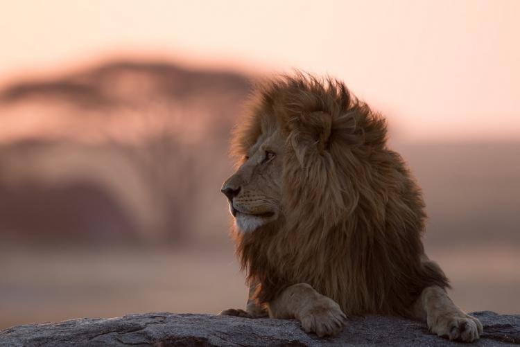 Safari en 4x4 en petit groupe en Tanzanie