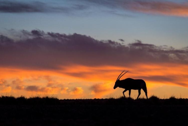Un Oryx à Sossuvlei, dans le désert du Namib