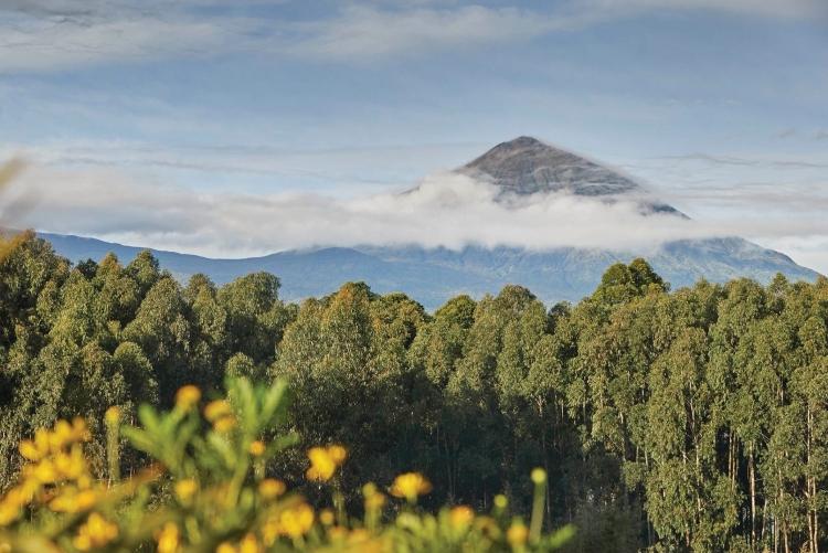 safari afrique  au Rwanda