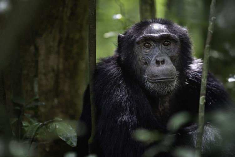 agence de voyage gorille