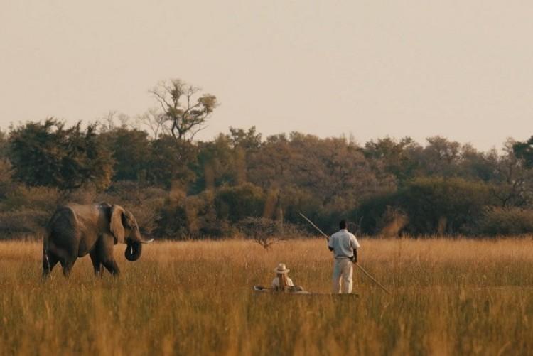 Safari en mokoro à Chief's Camp et rencontre avec un éléphant  Safari Botswana