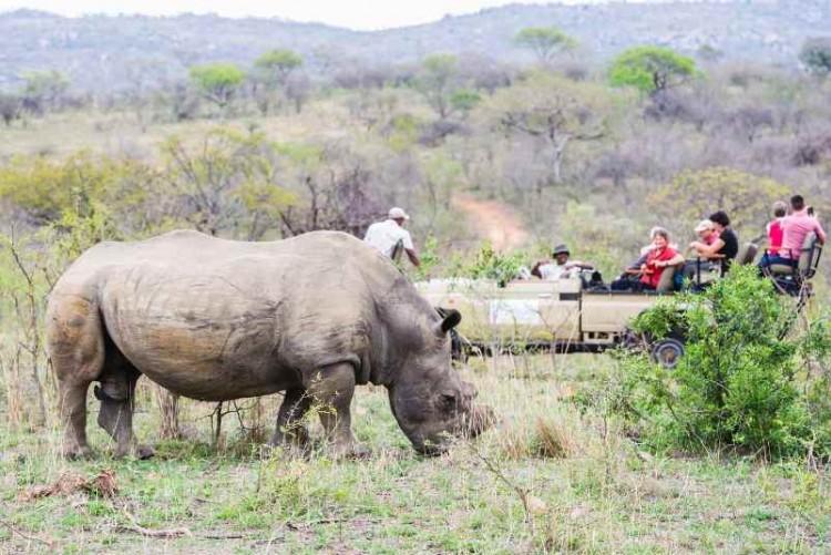 Safari en 4x4 en voyage en Afrique du Sud en réserve privée du Kruger