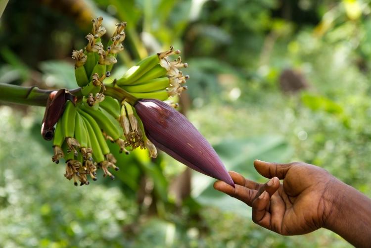 Séjour Zanzibar, visite d'une plantation d'épices et fruits exotiques