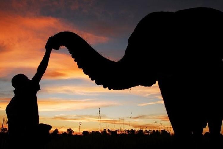 Rencontre avec les éléphants du Botswana, Safari Botswana