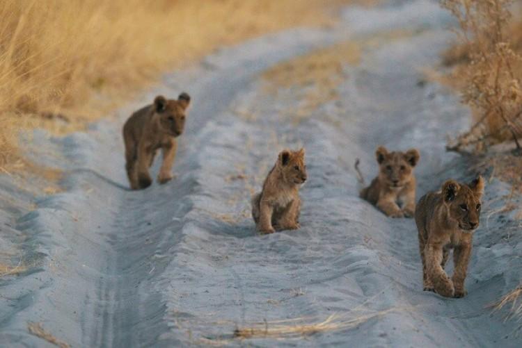 Safari dans l'Okavango - Safari Botswana