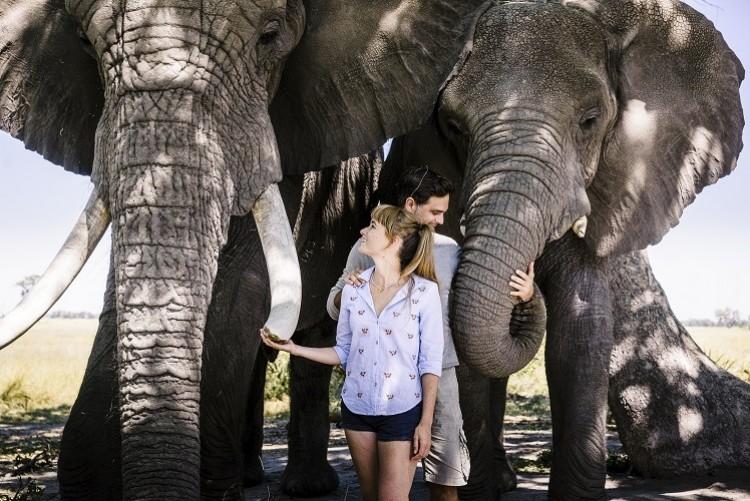 abu et Morula, deux éléphants orphelins habitués aux hommes