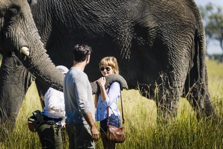 Marche avec les éléphants dans l'Okavango - Safari Botswana