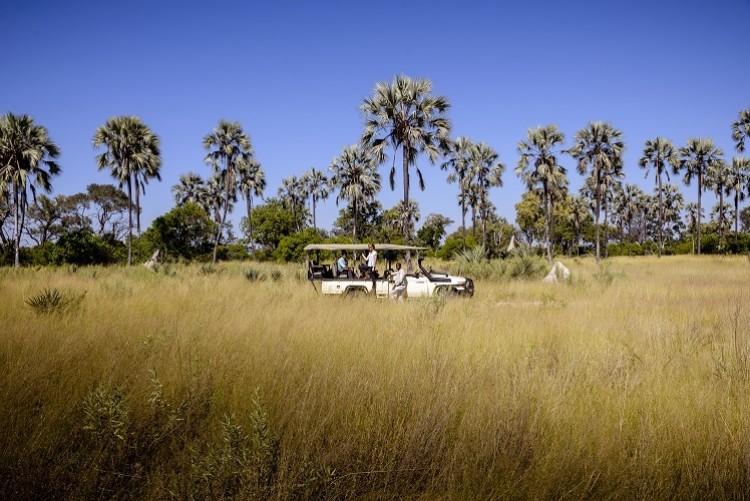 Safari en 4x4 dans le Delta de l'Okavango  Safari Botswana