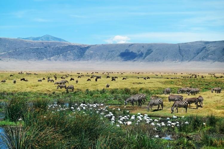 Le cratère du Ngorongoro en safari en Tanzanie
