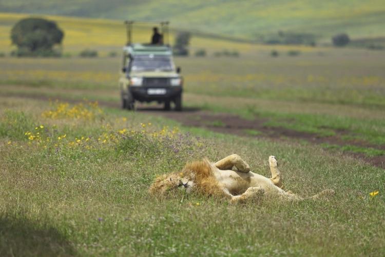 Safari dans le cratère du N'Gorongoro