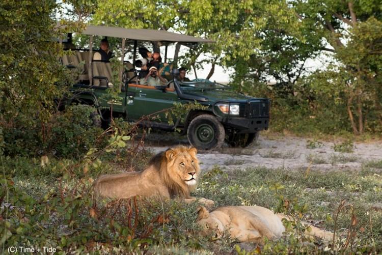 Safari en 4x4 dans le parc de Liuwa Plain, rencontre avec des lions - Zambie